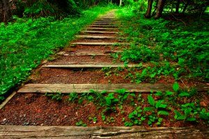 forest_trail